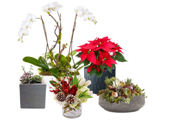 Botanical-Holiday-Guide-Image-1